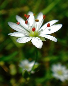 Wild flower;  photo by L'eau Bleue, via Flickr