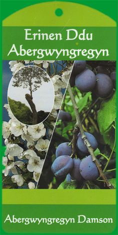 Abergwyngregyn Damson Fruit Tree Tag
