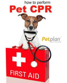 How to perform CPR on pets. Please share this life saving tip!