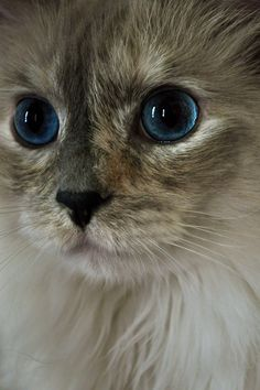 Princess and her pretty blue eyes