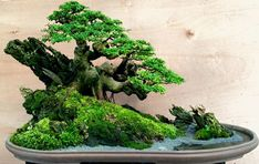 Another 'Newly Discovered' Bonsai Artist | Bonsai Bark