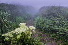 foggy floral trail