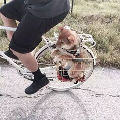 Things that make you go AWW! Like puppies, bunnies, babies, and so on. A place for really cute pictures and videos! Cute Dogs And Puppies, I Love Dogs, Pet Dogs, Dog Cat, Pets, Adorable Puppies, Shiba Inu, Baby Animals, Funny Animals