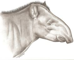 Painting of the new tapir species in Colombia y Brazil. Painting courtesy of Fabrício R. Santos.