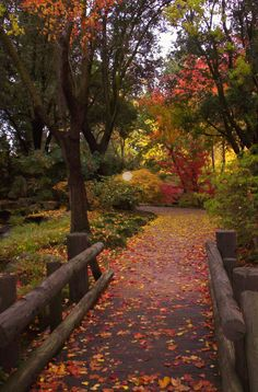 Woodward Park, Fresno, CA.  Path in Fall Leaves-- photo by Karen McClintock