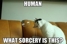 Human What Sorcery Is This ?