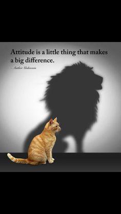 Attitude is a little thing that makes a big difference. It makes a cat a lion! / L'atteggiamento è una piccola cosa che fa una grande differenza. Esso rende un #gatto un leone! #gatti