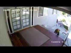 Tiny French Bulldog scares off two bears | Metro News