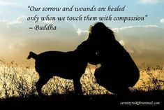 Reiki is #compassion Learn how you can experience a deeper connection with your animal companion.