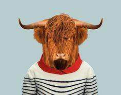 Scottish-Highland-Bull---Highland-Cattle-copia