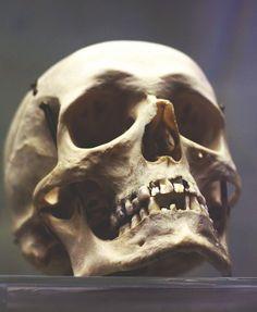 skull by anastasia r Skull Reference, Anatomy Reference, Photo Reference, Skull Anatomy, Human Anatomy, Real Skull, Photographie Portrait Inspiration, Skull Artwork, Skull Drawings