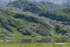 Lagos de Covadonga Asturias. Rutas por Asturias. https://www.desdeasturias.com/los-lagos-de-covadonga/