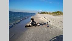 Cayo Costa State Park - just the beach, nature and you. Yes please! Hidden, unspoilt, Gulf Coast Beaches in Florida via visitflorida.com (scheduled via http://www.tailwindapp.com?utm_source=pinterest&utm_medium=twpin&utm_content=post18175638&utm_campaign=scheduler_attribution)