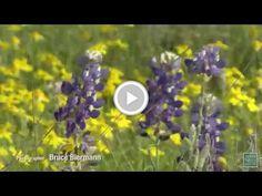 Postcard From Texas: Blue Mountain Peak Wildflowers Texas Parks, State Parks, Blue Mountain, Wildflowers, Outdoors, Social Media, Nature, Naturaleza, Wild Flowers