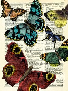 Selection of Butterflies - Marion McConaghie