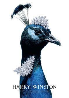 Harry Winston BeJEWELed Peacock
