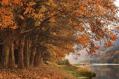late Autumn #1 by Tiger Seo on 500px
