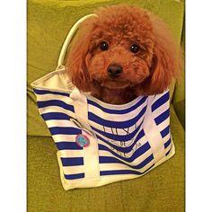 <3 :) Soo cute dog
