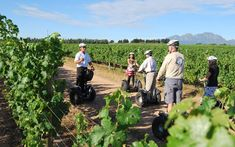 Tour the vineyards on a Segway PT (Personal Transporter), the most fun two-wheeled way to see the Spier farm. Activities In Cape Town, Segway Pt, Green Initiatives, Sightseeing Bus, Shady Tree, Ghost Tour, Summer Bucket Lists, The Great Outdoors, Traveling By Yourself