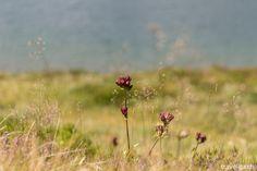 The high altitude flora