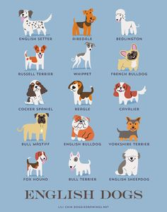 Wallpaper DNA: Dogs of the World An Illustration Created by Lili Chin