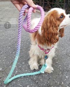 Spring dog leash