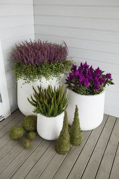 We show you how to make beautiful ornaments of moss, .- Vi viser deg hvordan du kan lage flotte pyntekuler av mose, lyng eller friske bl… We show you how to make beautiful ornaments of moss, heather or fresh flowers. Porch Plants, Backyard Plants, Backyard Garden Design, Balcony Garden, Outdoor Plants, Diy Garden Decor, Garden Pots, Flower Planters, Flower Pots