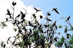 Birds garden in Mekong Delta