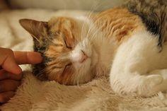 里親さんブログみぃはマンチカン? - http://iyaiya.jp/cat/archives/72143
