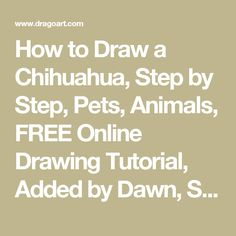 How to Draw a Chihuahua, Step by Step, Pets, Animals, FREE Online Drawing Tutorial, Added by Dawn, September 26, 2008, 7:02:42 pm