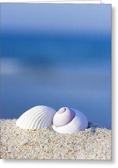 Seashells On The Beach Greeting Card by MotHaiBaPhoto Prints