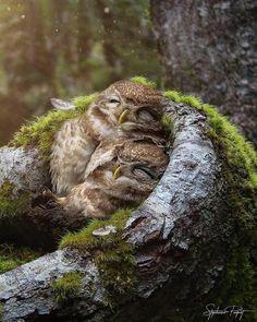 Animals And Pets Nature Animals, Animals And Pets, Baby Animals, Funny Animals, Cute Animals, Baby Owls, Wild Animals, Owl Photos, Owl Pictures