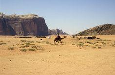 wadi rum: campamento beduino