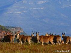Über Instagram hier eingefügt jetzt #kostenlos #Ebook http://ift.tt/2b9uNnZ - #Safari  #malariafrei  #Wildreservate in #südafrika  #southafrica #malariafree #gamereserves #wb1001rb #wbesaesa @jacislodges @pilanesberg_  @rhulani_lodge #wbpinsa @south_africa_through_my_eyes @samara_karoo  #afrika #africa #travelblogger #germanbloggers #safarilodge #feelthebush #luxurysafari @mongenalodge #urlaub