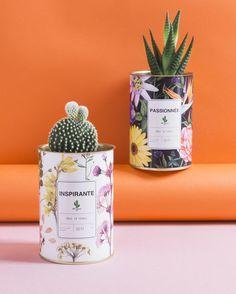 """AŸ Cactus® - Studio Végétal (@aycactus) sur Instagram : """"J A R D I N S E C R E T"""