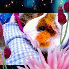 The very first #cameran hamster! @asmro-#cameranapp