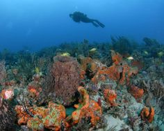 """Pompano Beach is truly """"nature's aquarium"""" with some of the best scuba diving and snorkeling in the nation."""