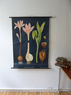 Vintage Botanical Meadow Saffron Pull Down Chart by Discoverprints, $245.00