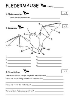 Monster High, Preschool, Bats, Halloween, Nature, Third Grade, Printable Worksheets, Coloring Pages For Kids, Teaching High Schools