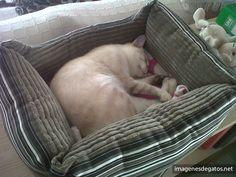 Gato durmiendo en su cama para gatos.