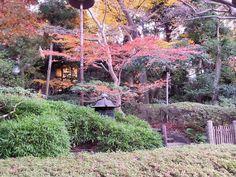 Littlelixie Foliage at Happo-en  Happo-en, Garden of 8 Views. Tokyo, Japan, 15th December 2014.