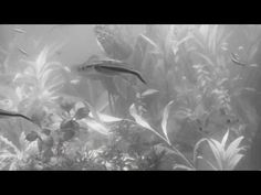 Tropical Aquariums in Wimbledon by #Happyarium