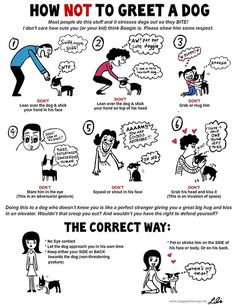 How NOT to Greet a Dog - Doggie Drawings by Lili Chin