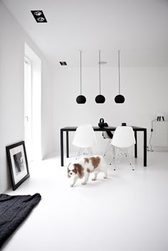 Black and white and a King Charles! Norm Architect