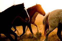 Horses Serie 11