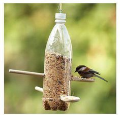 Alimentador de pássaro
