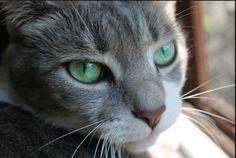 my cat Gwendolyn