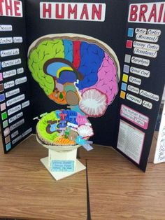 10 best 3d brain images science projects, school, science classroom