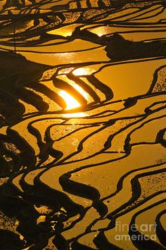 ✯ Rice Terraces Of Yuanyang, China