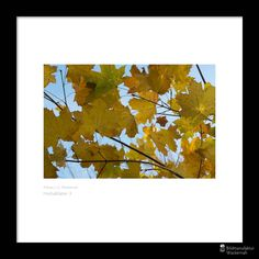 nice Fotografie »Herbstblätter 3«,  #Herbst #Naturansichten